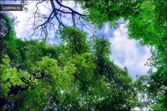Как происходит смена пород деревьев