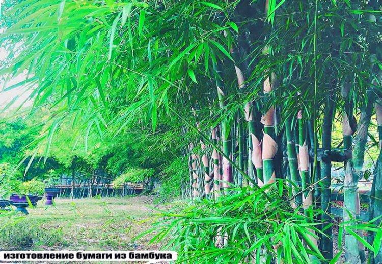 Изготовление бумаги из бамбука