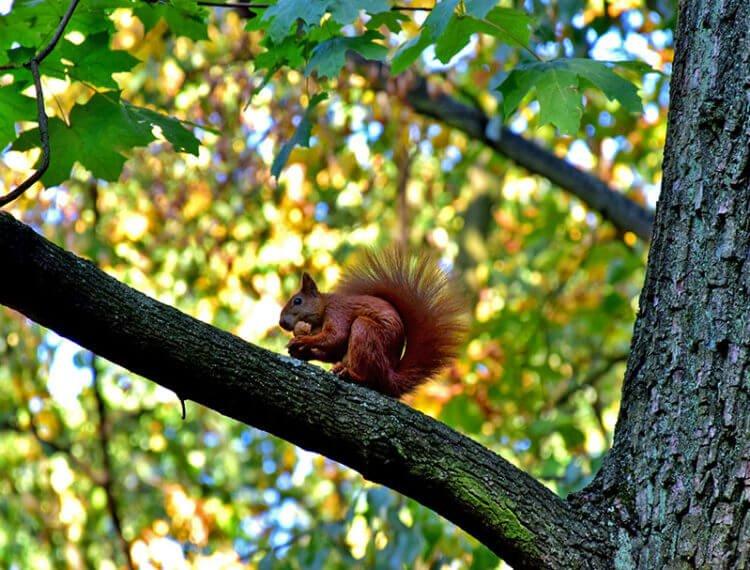 Вторжения в жизнь леса отражается на жизни его обитателей