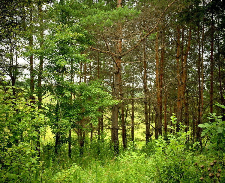 Использование леса человеком