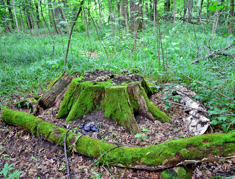 Знание законов жизни леса дает возможность сохранить лесные насаждения