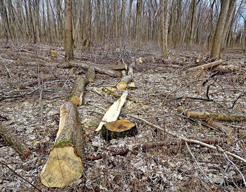 Сплошные рубки леса