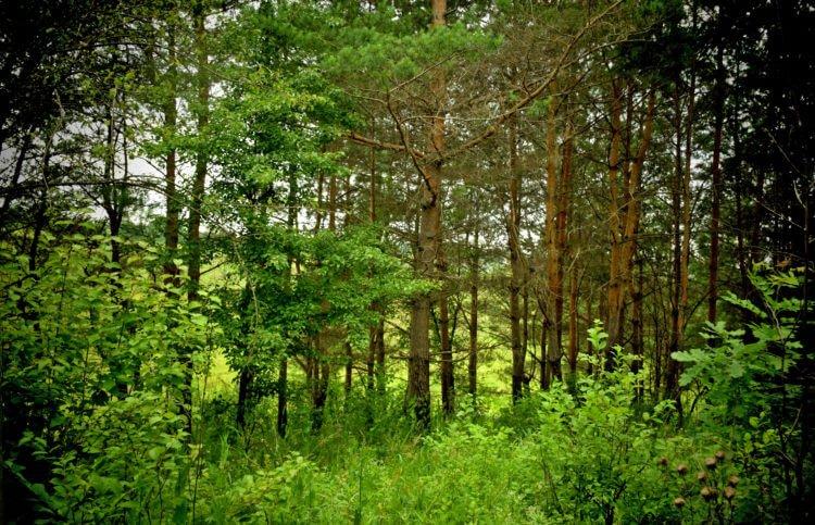 Правила рубки леса