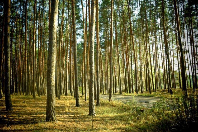 Деревья это будущее