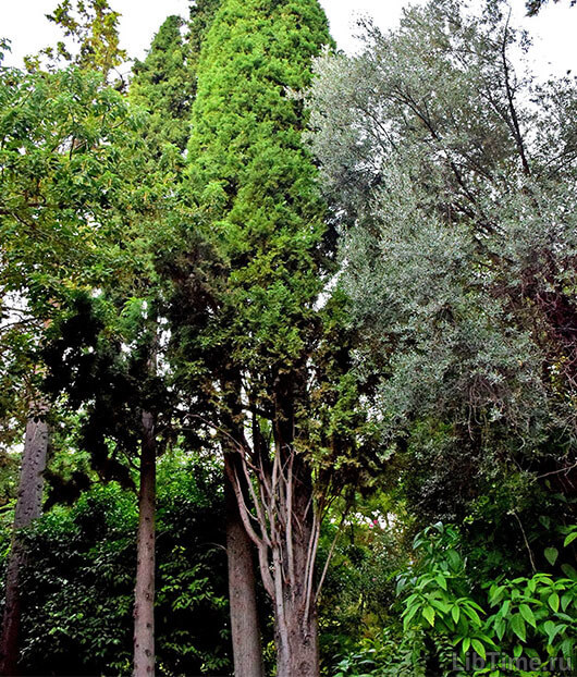 Вид рубки леса зависит от качества древисины