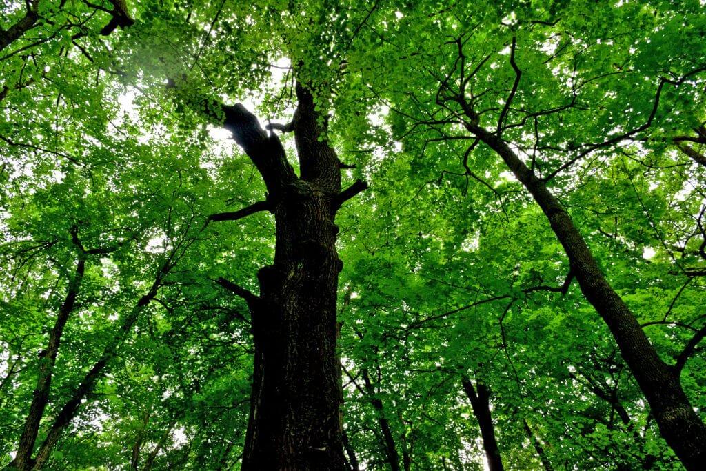 Рубка ценных пород деревьев