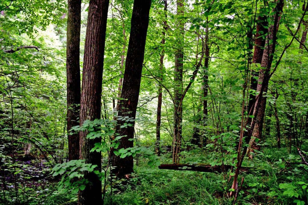 Выборочная рубка леса