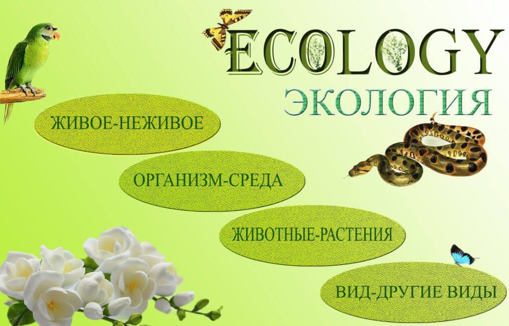 Экология - наука о взаимоотношениях между организмами и средой