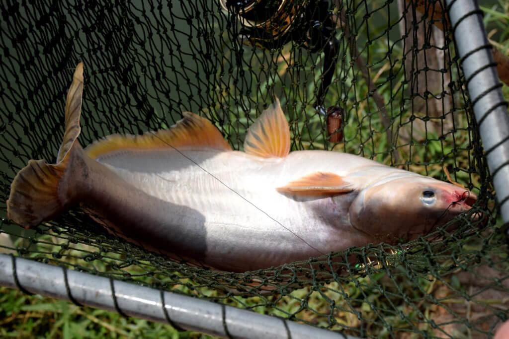 Определение размера вылова рыбы