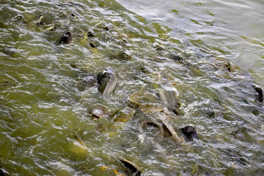 zamor-ryby