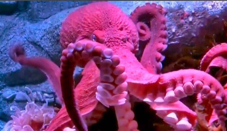 Осьминог - обитатель моря, который использует реактивное движение