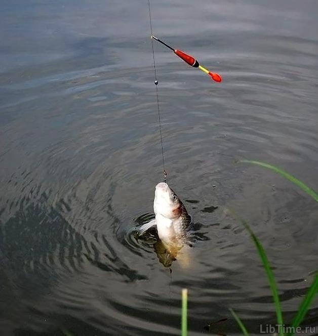 Насадка для ловли карася - важна для хорошего улова рыбы