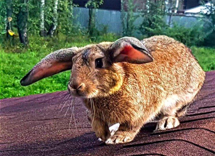 Прогулка крольчихи