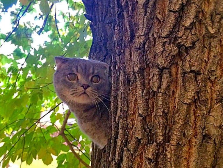 Серый кот - охотник на змей