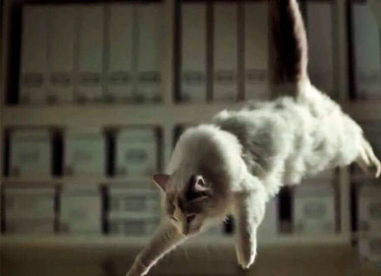 Падающая кошка становится на четыре лапы