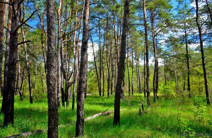 Разновидности леса