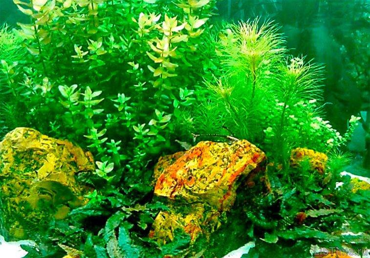 Развитие водорослей