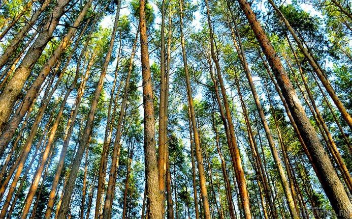 Чем привлекает лес