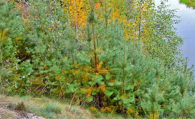 Смена типов леса