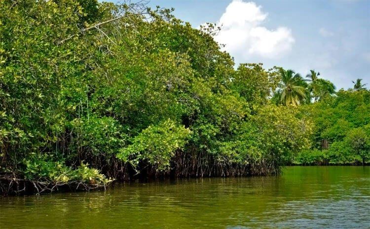 Лес как хранитель и регулятор вод