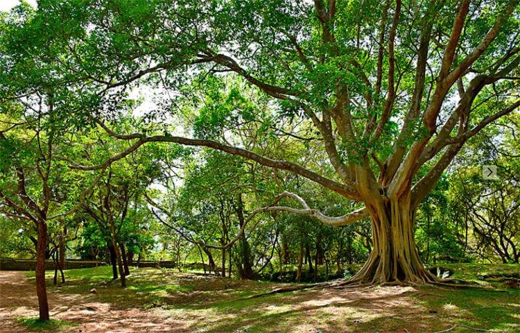 Как лес влияет на окружающую природу