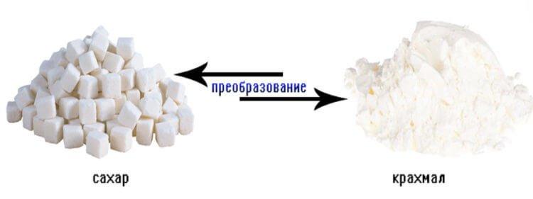 Процесс перехода сахара в крахмал, и наоборот - лежит В основе открывания и закрывания устьиц