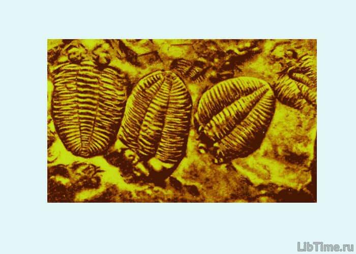 Трилобиты - представители животного мира древнейших морей