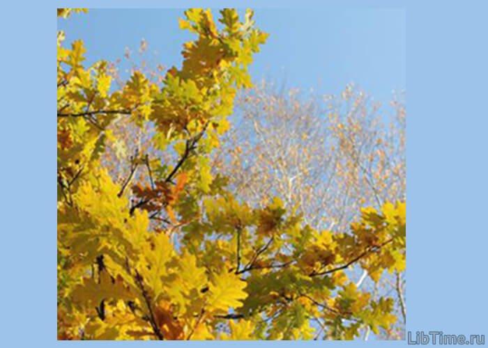 Осенняя листва дуба