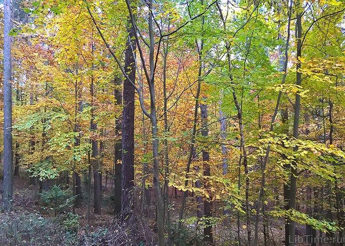 Деревья сбрасывают листья