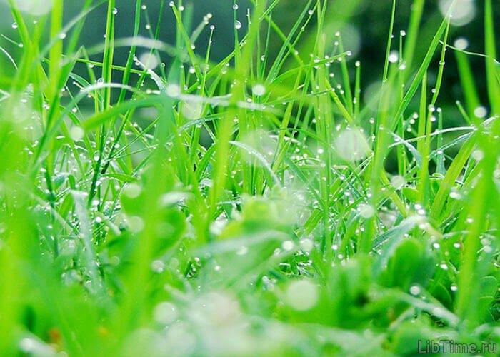 Усвоение растениями углекислого газа при участии света и хлорофилла