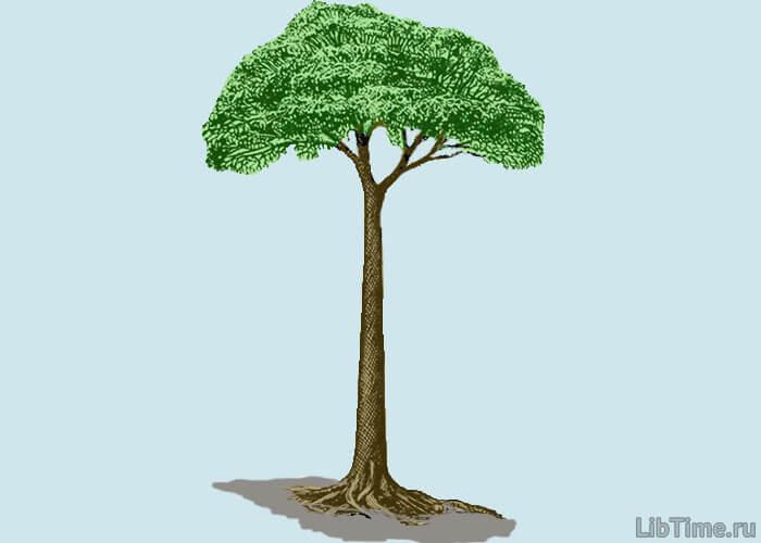 Чешуйчатое дерево