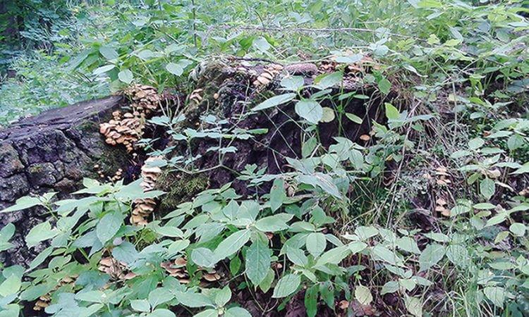 Строение и жизнедеятельность грибов