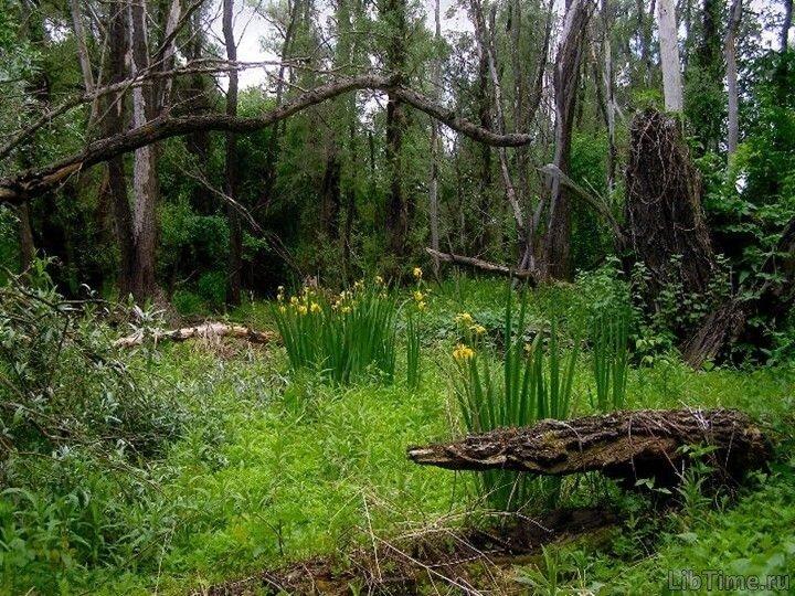 Заболачивание леса