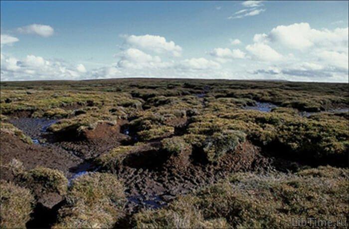 Торф на болоте