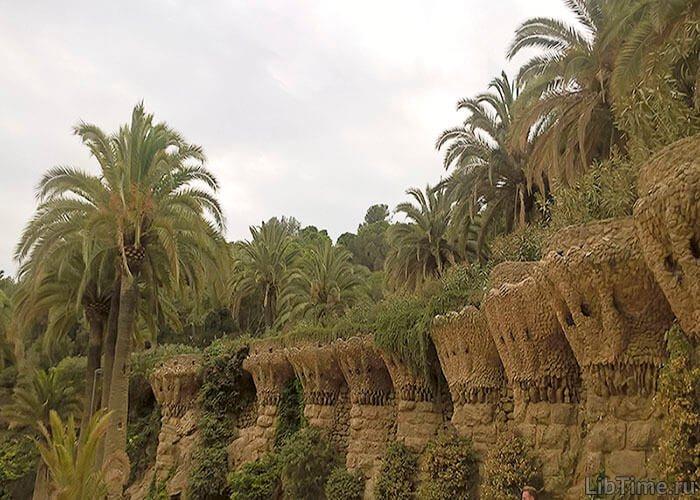 Растения засушливых мест