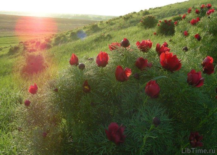 Степная растительность