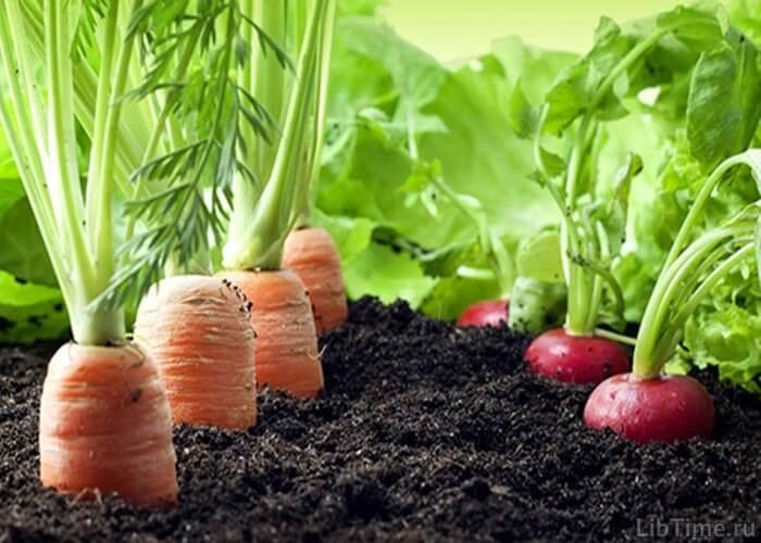 Крупные овощи