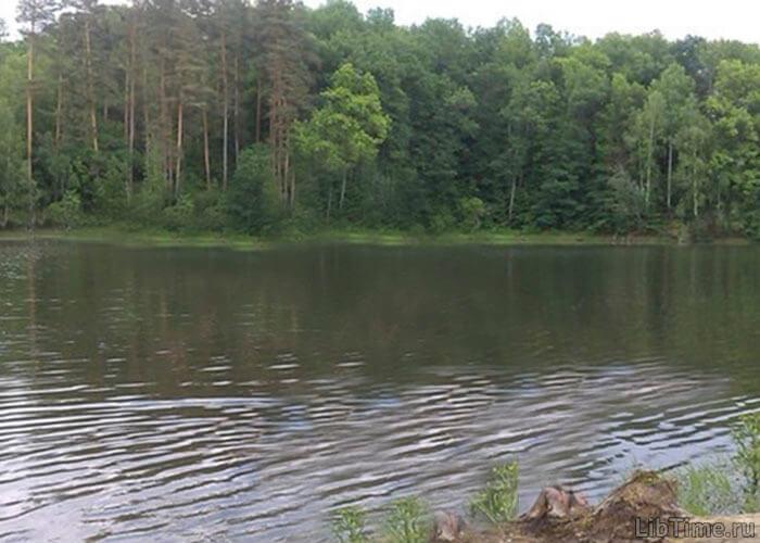 Лесной массив