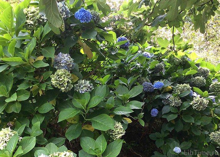 Разнообразие мира растений