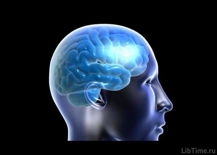 Кора мозга человека