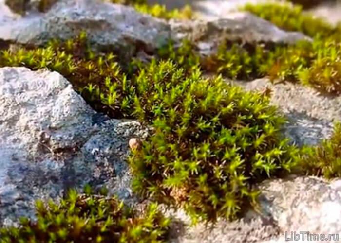 Северные растения