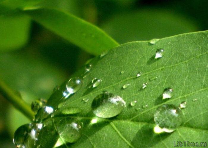Проводящая система растений