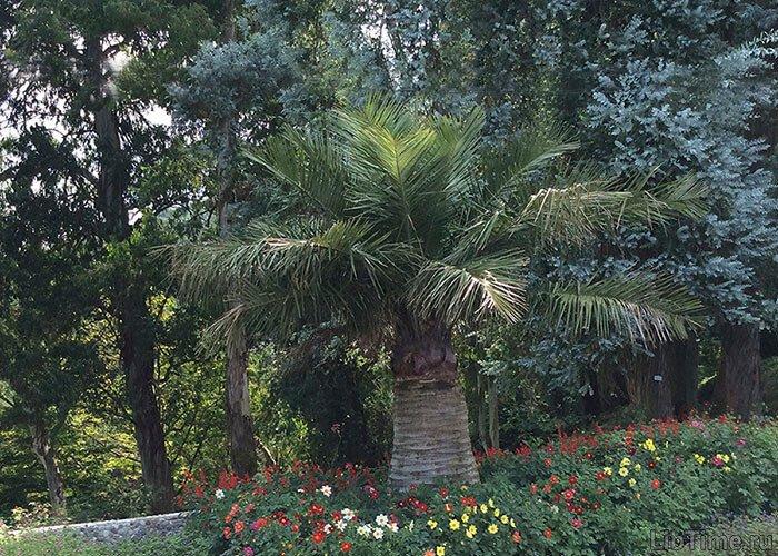 Южные растения