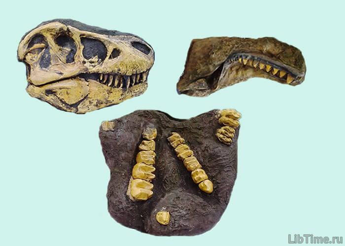 Раскопки древних животных