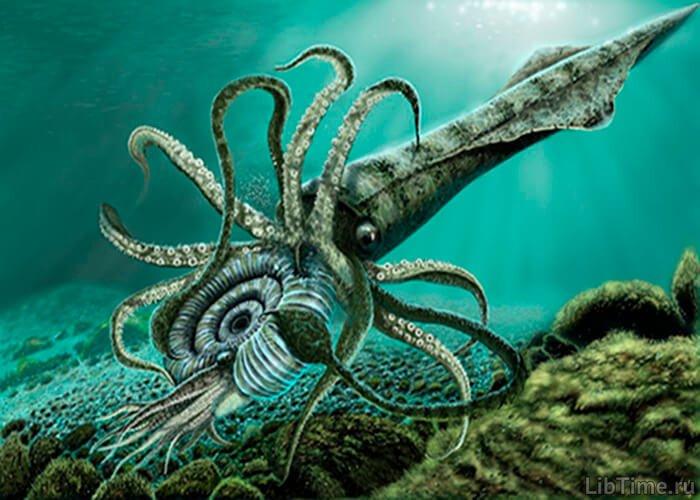 Древний головоногий моллюск белемнит