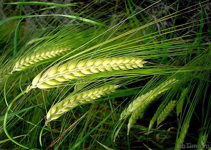 Фотосинтез и урожай