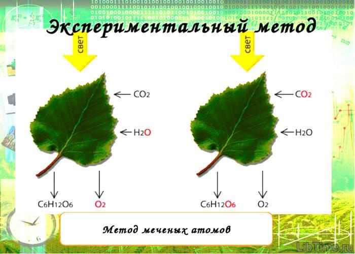 Метод меченых атомов в биологии