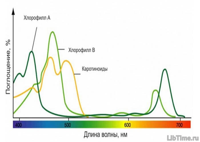 Процесс фотосинтеза в листьях растений