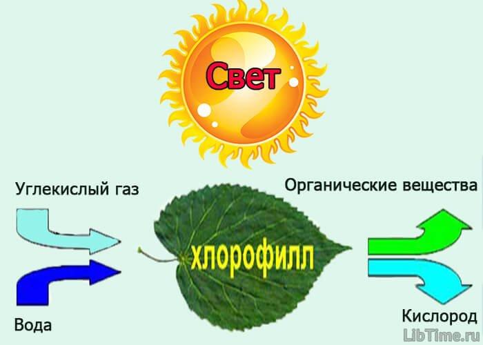 Роль света в жизни растений