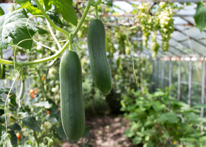 Интенсивность фотосинтеза— основа для получения высоких урожаев